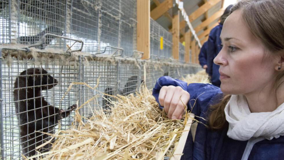 PÅ BESØK: Dyrevernalliansen var i forrige uke på besøk hos nabogården til Indergård. Da var også Indergård selv tilstede. Her ser vi informasjonsrådgiver Kaja Ringnes Efskind og en mink fra nabofarmen. Foto: Iselin Linstad Hauge