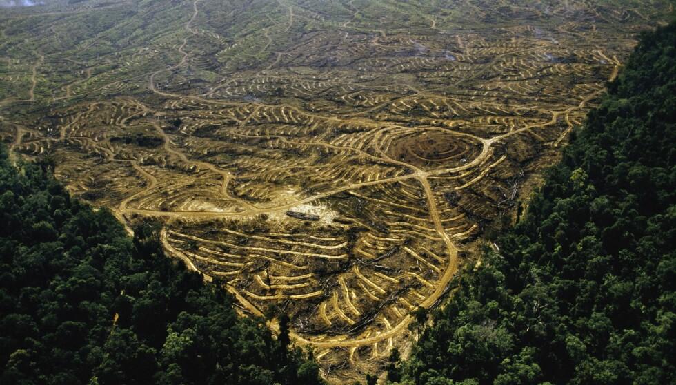REGNSKOGØDELEGGELSER: Stotinget har vedtatt et forbud mot biodrovstoff av palmeolje, for å hindre regnskogødeleggelse og redusere klimagassutslipp. Forslaget har falt i dårlig jord i Indonesia, som nå truer Norge med handelskrig. Bildet er tatt på Borneo. Foto: NTB Scanpix