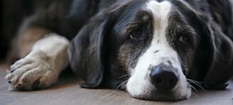 Kan man bli forfatter selv om man har hund?