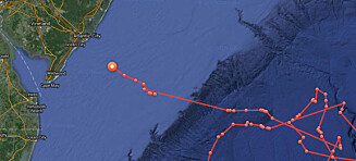 Fem meter lang hvithai på vei mot ferieby