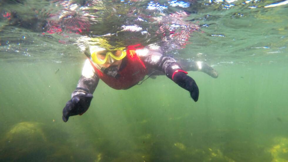 ELVESNORKLING: Med dykkermaske og våtdrakt lar du strømmen føre deg nedover elva. Foto: TORILD MOLAND