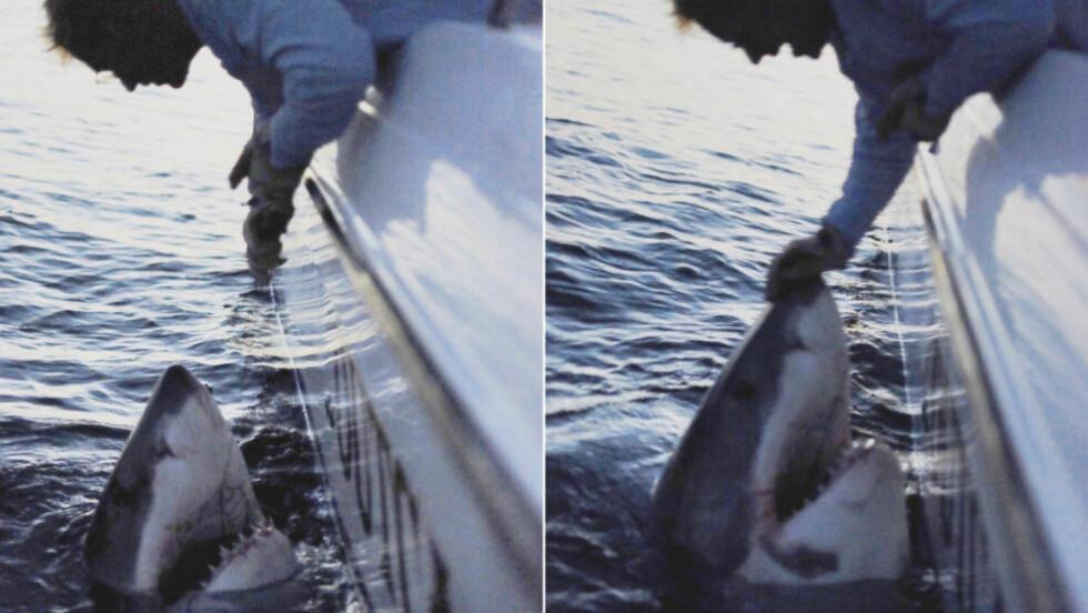 «MONSTER»: Den amerikanske fiskeren Chip Michalove fanget denne hvithaien med fiskestang tirsdag denne uka. Selv beskriver han dyret som en «monster-hvithai». Foto: Outcast Sport Fishing