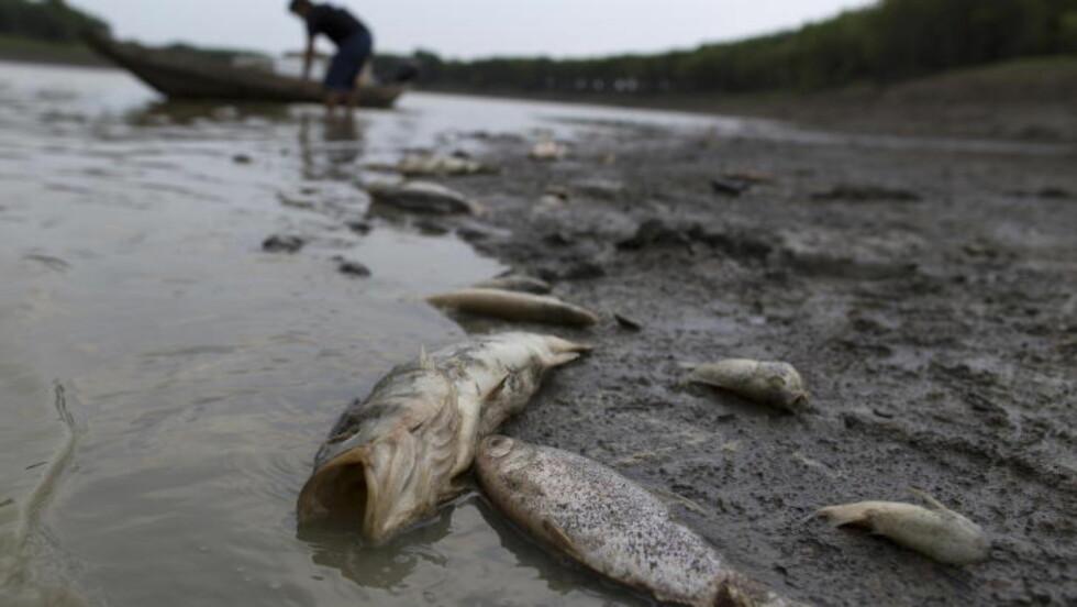 PÅ TØRT LAND: Vannstanden i elva Solimoes i Amazonas nådde et nytt bunnivå i oktober 2015. Fisk døde, tusenvis av båter ble strandet på land og lokalbefolkningen måtte ha nødhjelp. Foto: Bruno Kelly / Reuters / NTB Scanpix