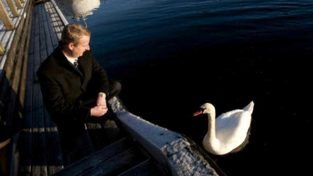 GODE VENNER: Terje Søviknes har mange venner på Os, blant annet en stor svanefamilie.  Foto Tor Erik H. Mathiesen