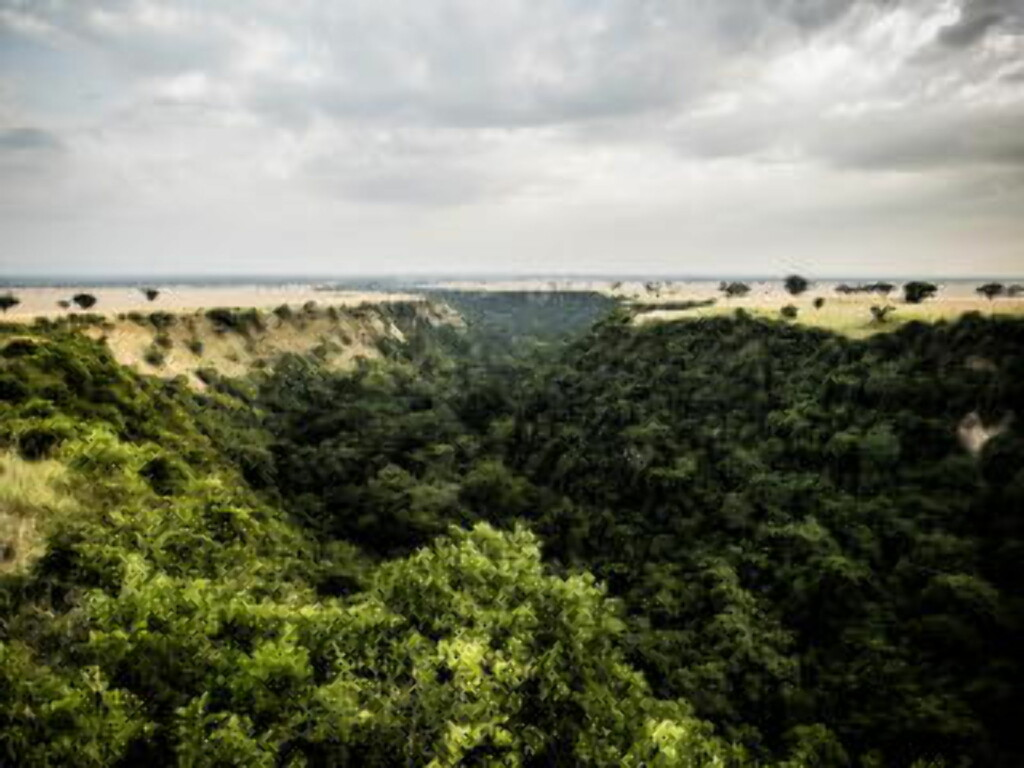 JUNGEL GJENNOM SAVANNNEN: Kyambura Gorge er ei kløft på 1,6 mil, der en mil strekker seg inn i nasjonalparken. På det dypeste er den 100 meter, og på det bredeste er den en halv kilometer. Foto: PETTER LØKEN