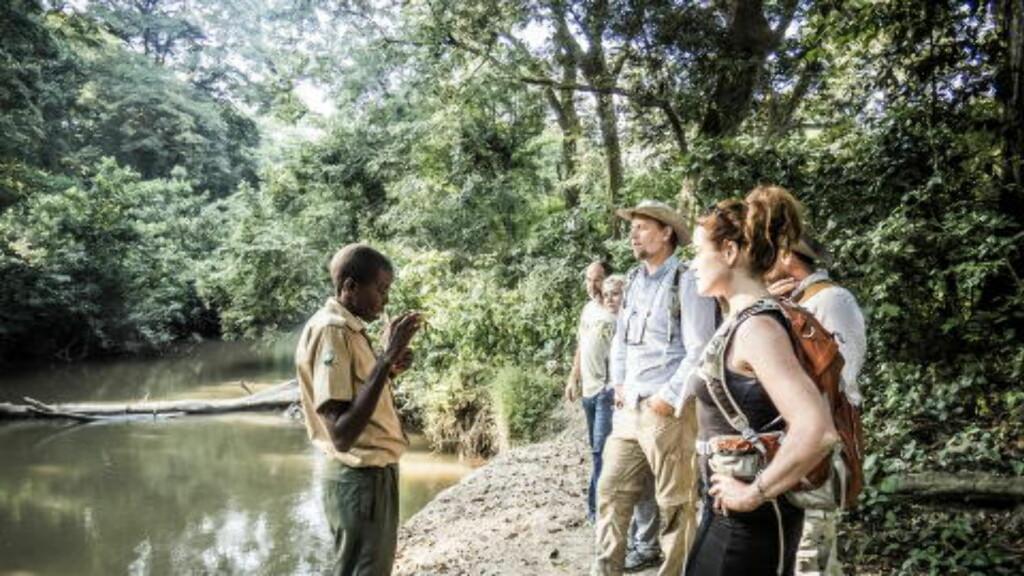 PÅ SKOGBUNNEN: Nede i Kyambura Gorge kan du blant annet møte elefanter, løver, leoparder, bøfler, antiloper, colobus-aper og bavianer, forteller guiden Adolf Tibeyarirwa. Turen gjøres likevel til fots, men med væpnet vakt. Foto: PETTER LØKEN