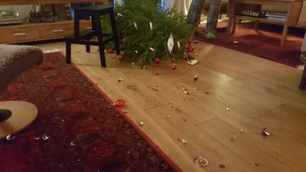 SÅNT SKJER: Bjørn melder at hunden Ludvig (7) bidro til julestemninga med dette kunststykket 20. desember. Det gikk hardt ut over juletre og pynt, men heldigvis gikk alt bra med både hunden og eierne, kan han fortelle.