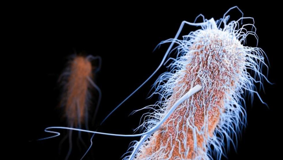 DOBBEL SÅ HØY FOREKOMST:  Det har blitt konstatert dobbelt så høy forekomst av ESBL-CARBA-holdige bakterier i Norge i år sammenlignet med i fjor. ESBL-CARBA er en antibiotika-resistent mekanisme som gjør bakterer ekstra motstandsdyktige mot antibiotika. De fleste typer antibiotika er nyttesløse som behandling hvis ESBL-CARBA-bakterier først får fotfeste i infeksjoner. Denne 3D-modellen viser hvordan en såkalt ESBL-holdig bakterie ser ut. Foto: NTB Scanpix