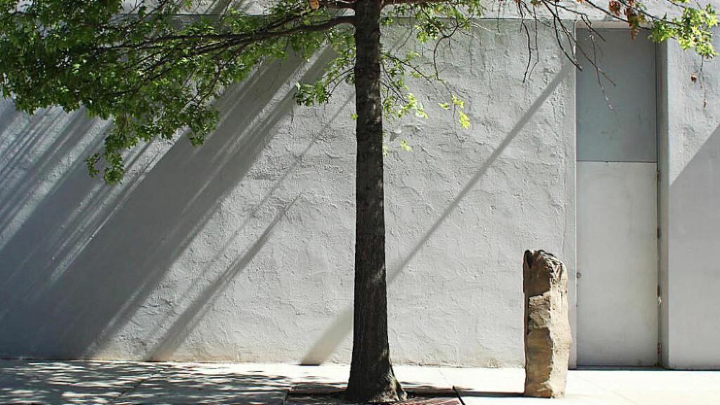 LÆR AV TRÆR: Tyske Joseph Beuys var død lenge før internettalderen og de billige flyreisenes tid. Men hans innsikter om nødvendigheten av balanse mellom kultur og økologi er mer gyldige enn noen gang. Bildet viser et av trærne i prosjektet «7000 Eichen»: Sju turen eiketrær plantet i anledning Documenta-utstillingen i Kassel i 1982. FOTO: DAVID BEHRINGER