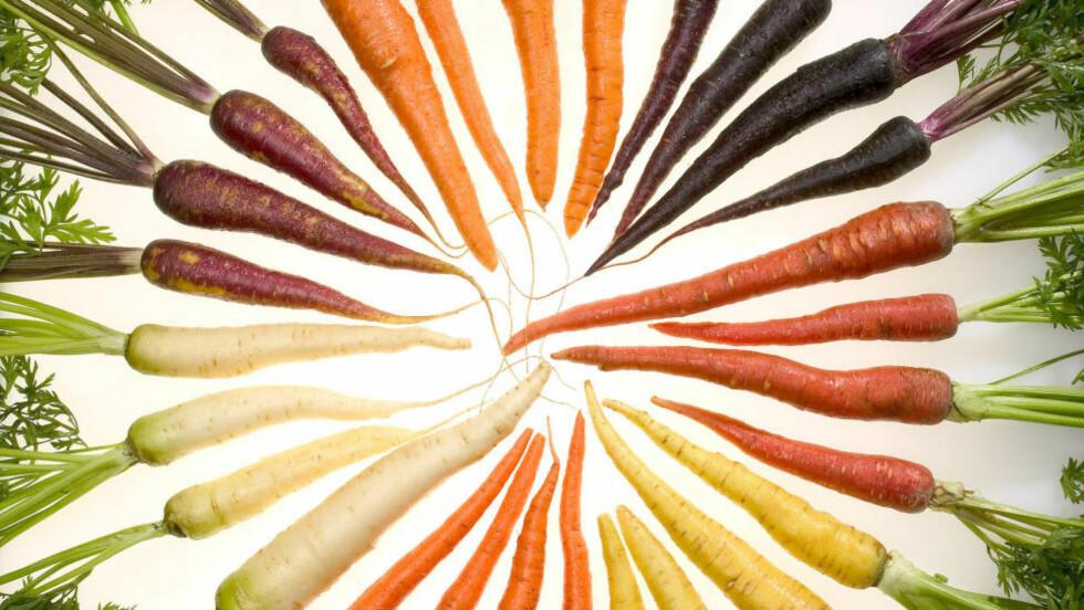 REGNBUEN: Gulroten er grønnsaken vi spiser aller mest av. Den oransje er vanligst, hvorfor ikke prøve en ny farge i år? Foto: STEPHEN AUSMUS/WIKIMEDIA COMMONS