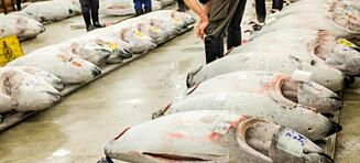 I nesten 100 år har fiskemarkedet Tsukiji vært en av Tokyos mest sagnomsuste reiseopplevelser