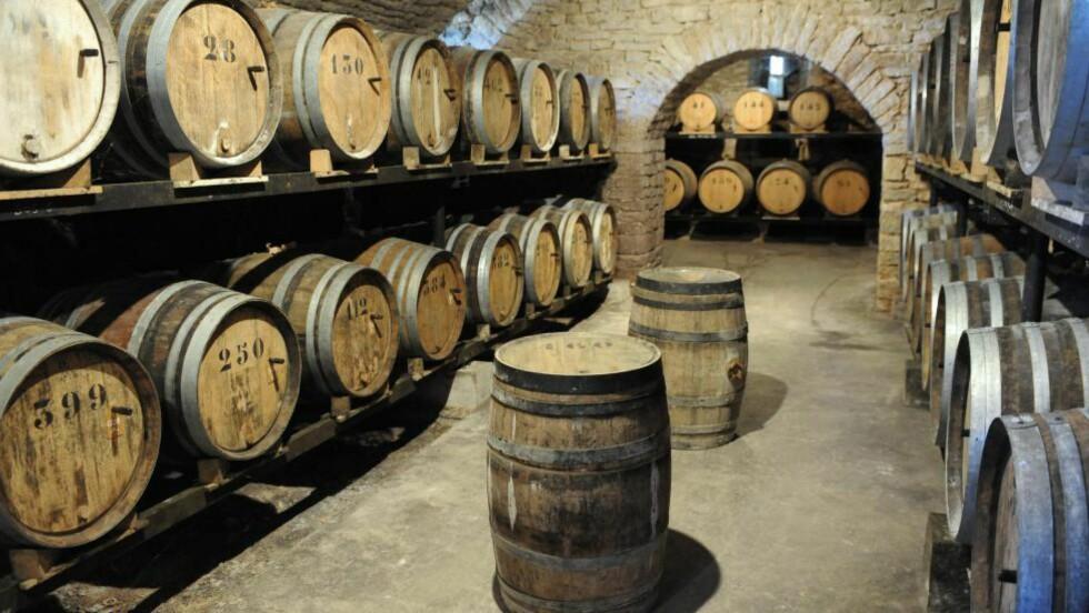 PÅ TØNNE: Tønner fulle av vin laget på savagnindruen, typisk for dette området i Jurafjellene i Frankrike på grensa til Sveits. Her ligger vinen i seks år på tønner dekket av et tykt mugglag. Foto: Stein Johnsen / SAMFOTO / NTB Scanpix