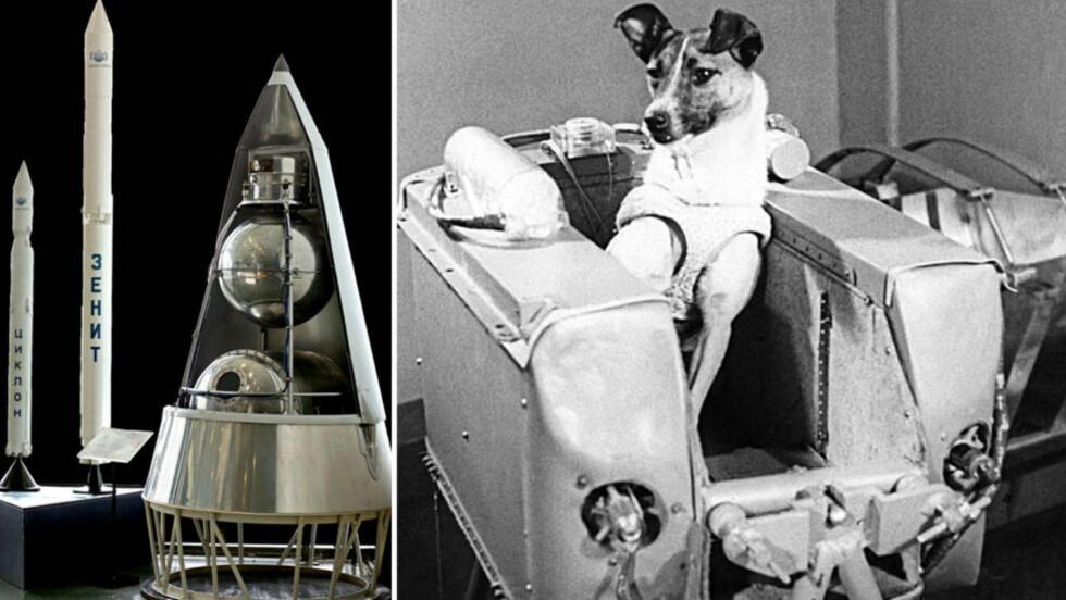 ROMHUNDEN «LAIKA»Tispa «Laika» var viktig for Sovjetunionen for å vinne romkappløpet mot USA. I 1957 ble hun sendt - som første levende - opp i verdensrommet, for at Sovjetunionen fikk testet om et menneske ville overleve oppskytningen i et romfartøy, og takle å være i vektløs tilstand. Hun døde bare fem-sju timer etter oppskytningen i Sputnik II 3. november 1957. Foto: NTB Scanpix