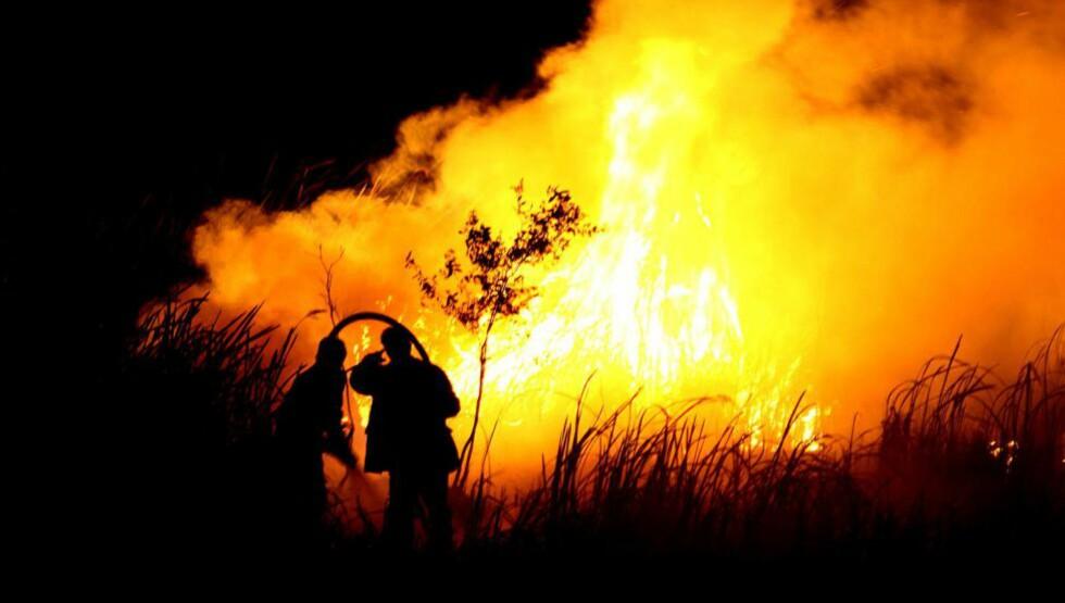 TRUET: Skogbranner er ikke uvanlige i Indonesia; de er en del av jordbruket i landet. Antallet skogbranner hittil i år er imidlertid uvanlig, og flere av dem er ukontrollerte. Dette bekymrer miljøvernerne. På dette bildet sees to brannmenn som forsøker å slukke en brann i Ogan Illir på Sumatra, som er en av Indonesias øyer. Ikke bare ødelegger brannene regnskogen: røyken og gassene som siver opp fra bakken forurenser også nabolandene. Som følge av dette har flere fly måttet snu da de ankom flyplassen i Phuket i Thailand - på grunn av dårlig sikt - en direkte konsekvens av svært mye forurensning. Foto:  AFP PHOTO / ABDUL QODIR