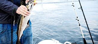 Her får du garantert fisk i sommer
