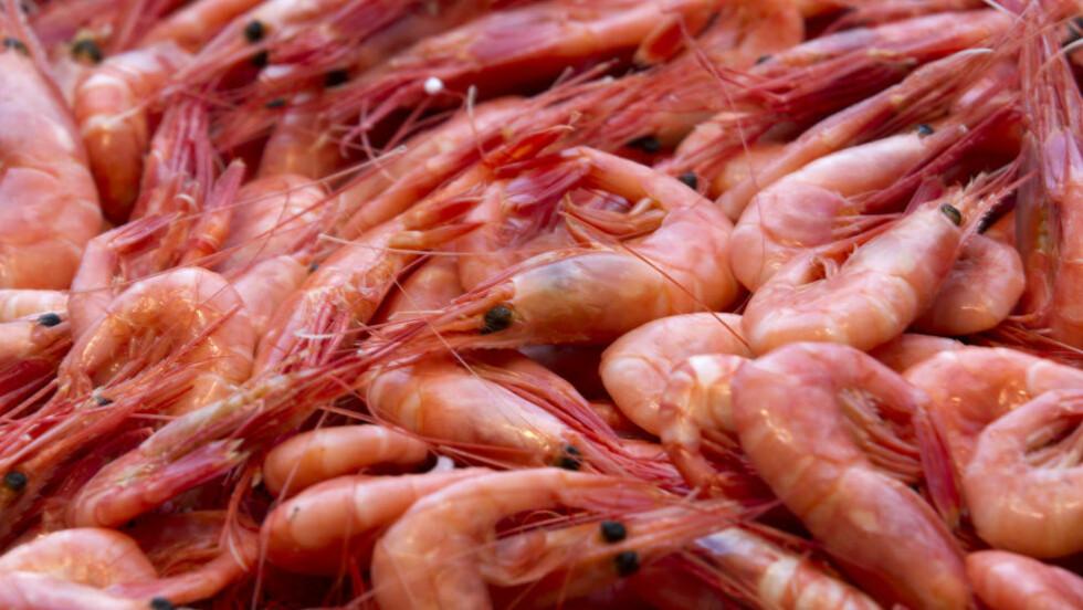 Fiskere, produsenter og butikker sliter med å få tak i reker. Foto: Terje Bendiksby / NTB scanpix