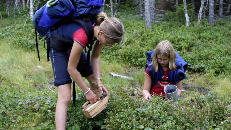 BRA BLÅBÆR-RAPPORTER:  Fra en tidligere somemr med blåbær i spannet, fra Nordmarka i Oslo. Illustrasjonsfoto: Espen Bratlie, Samfoto.