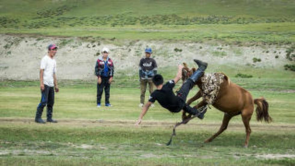 VRIEN HEST. Mongolske hester har spesielle meninger. Foto: Adventures.com.
