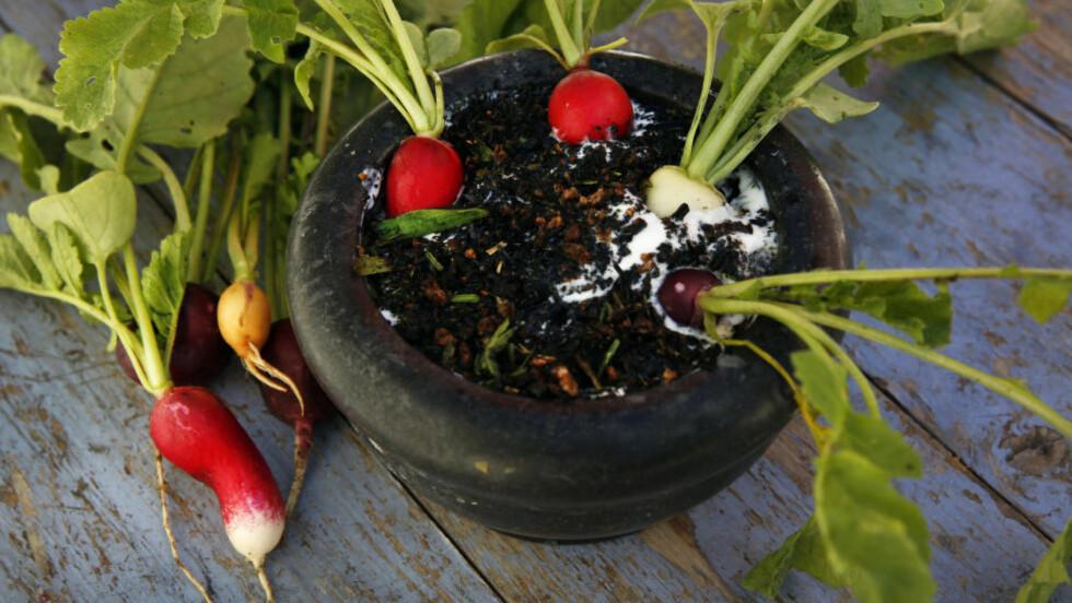 FRA JORD TIL BORD: Andreas Viestad planter reddikene i en hjemmelaget yoghurtdressing, og dermed blir de til en rett — en forbløffende jålete, men velsmakende rett som gir følelsen av å høste dem rett fra jorda, på bordet. Foto: METTE RANDEM