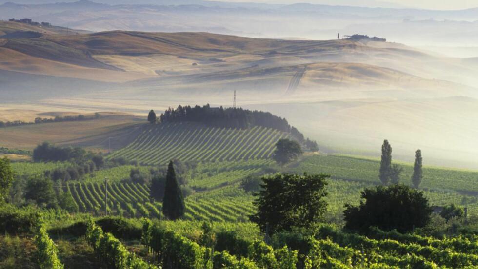 TOSCANA: Italienske Toscana har noe for enhver smak: Naturskjønne fjell, kulinariske nytelser og historisk kunst. Foto: HANS-PETER SIFFERT / BON APPETIT / NTB SCANPIX