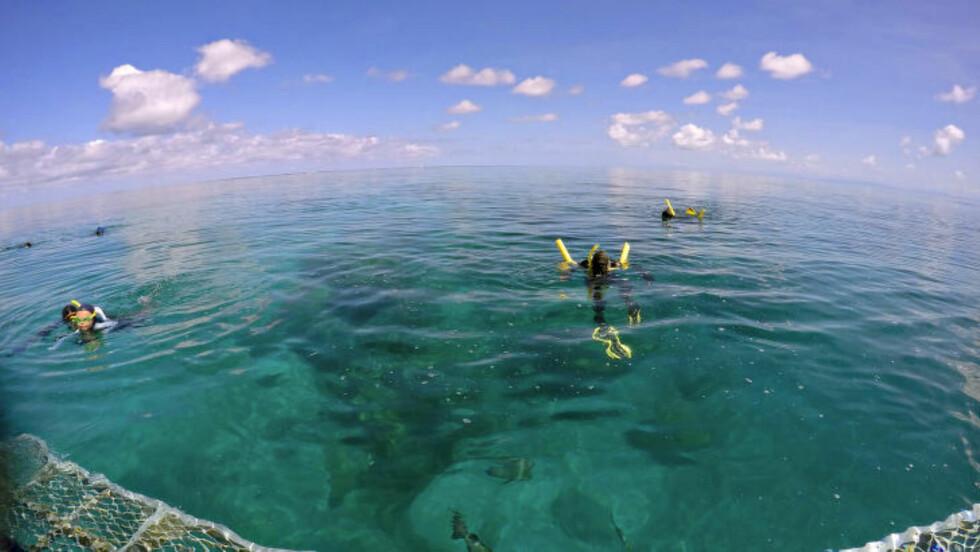 GREAT BARRIER REEF:  Fra Port Douglas med tre surfestopp langs revet. Foto: OLE C. H. THOMASSEN / TTPS
