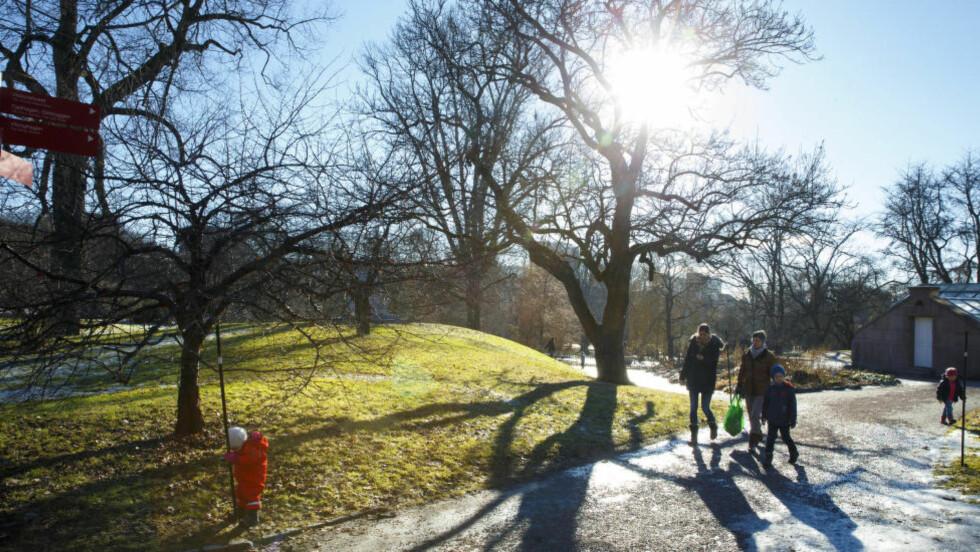 VÅR: Mye tyder på at våren har kommet for å bli i Sør-Norge. Meteorologisk institutts prognoser viser at det bolir oppholdsvær og sol hele neste uke.   Foto: Heiko Junge / NTB scanpix