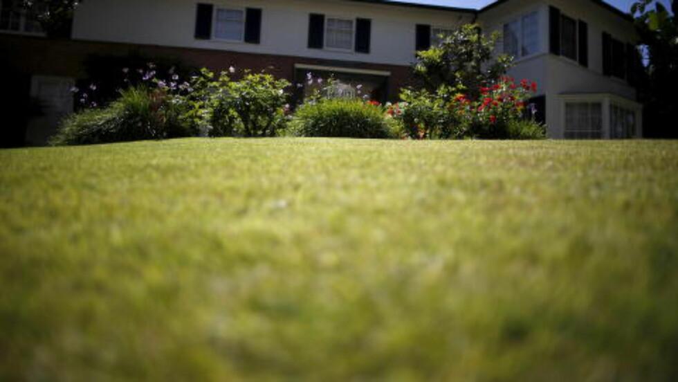 IKKE BRUNT: Utenfor nabolag og bygrense har landskapet tørket helt ut, men vannspredere holder fortsatt gresset grønt i velstående nabolag i California. Dette bildet er tatt 8. april.  Foto: REUTERS/Lucy Nicholson