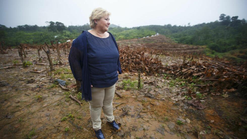 AVSKOGING:  Statsminister Erna Solberg ser på et avskoget område i regnskogen på Sumatra onsdag. Solberg er på offisielt besøk i Indonesia, hvor det norsk-indonesiske samarbeidet for å redde regnskog er et sentralt tema.   Foto: Heiko Junge, NTB Scanpix.