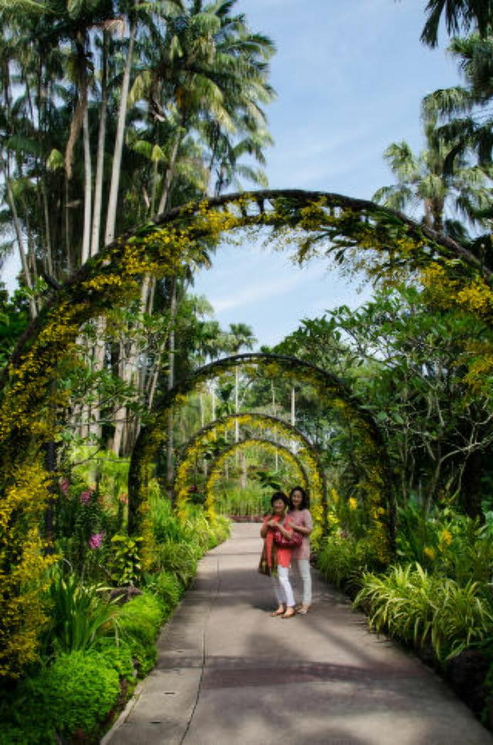 GRØNNE SINGAPORE: I den botaniske hagen kan du vandre mellom tusentalls orkidearter, eller slappe av under et tre og nyte den grønne oasen midt i millionbyen. Foto: MARI BAREKSTEN