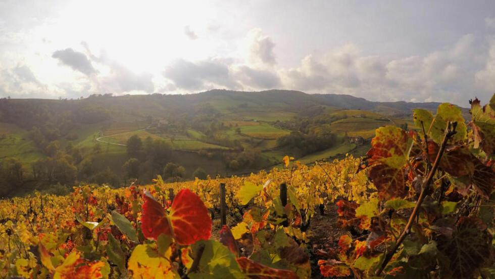 MINDRE KJENT: Beaujolais ligger nord for Lyon, plassert mellom Rhone-alpene i sør og Bourgogne i nord. Foto: Goproo3/Creative Commons