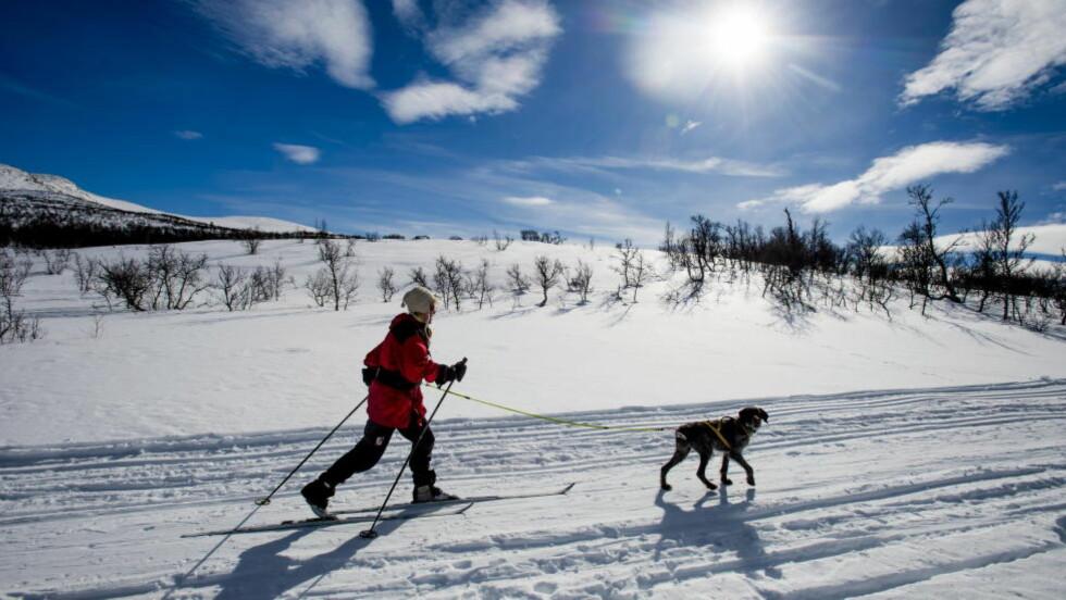 LITE SNØ SÅ LANGT I ÅR:  Savner du skiene? Er det skiføre der du bor? Dette bildet er fra skisesongen i fjor, på idyllisk påskeferie på Røros. Foto: Thomas Rasmus Skaug / Dagbladet