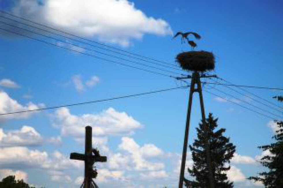 KRUSIFIKS OG REDE: Det maleriske bildet av et bebodd storkerede og det digre korset som - enn så lenge - pryder landsbyene nord i Polen. Foto:Asbjørn Svarstad
