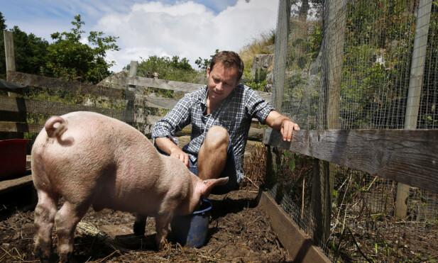 HELT VANLIG, MEN SEG SELV: Salami var ingen enestående gris, ikke noe prakteksemplar. Han likte å bli klødd bak det venstre øret, men ikke like godt bak det høyre.