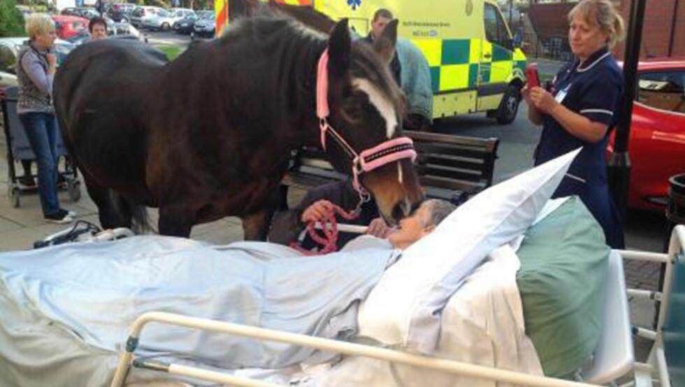 ADJØ: Familien til Sheila Brown fikk lov av sykehuset til å ta henne med ut på parkeringsplassen utenfor sykehuset, slik at hun fikk tatt farvel med hesten Bronwen. Foto: Caters News Agency / Bulls