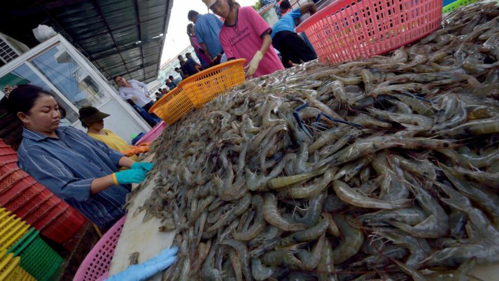 DEBATT OM ARBEIDSVILKÅR:  Vilkårene for arbeidere i den thailandske rekeindustrien med franske eierinteresser har vært gjenstand for gransking i høst av antisaveri-organisasjoner, her fra Samut Sakhon-provinsen i utkanten av Bangkok. Foto: PORNCHAI KITTIWONGSAKUL, AFP/NTB Scanpix.