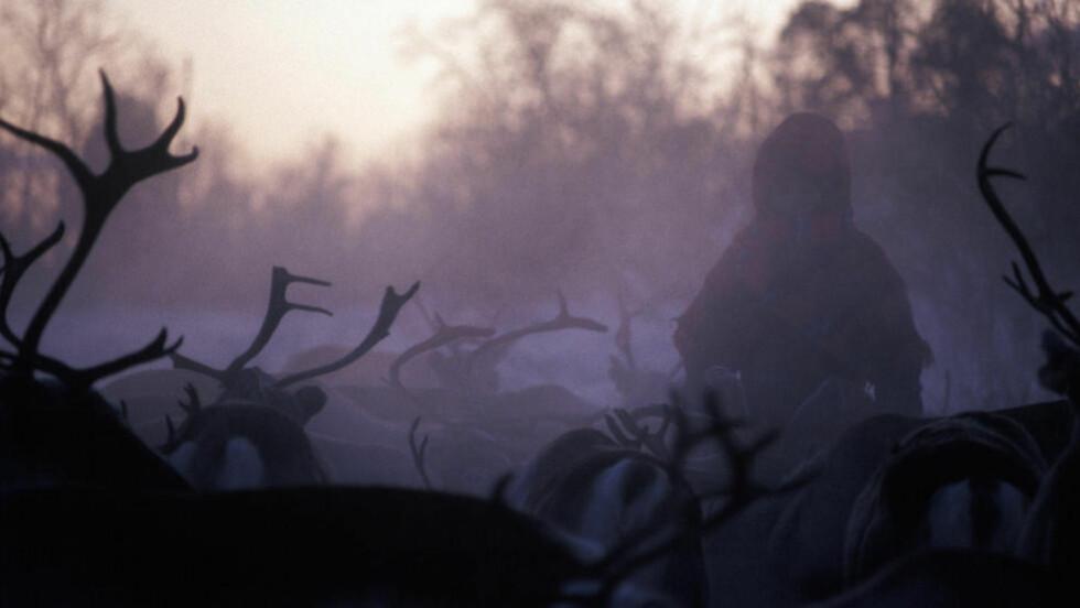 13 MINUS:  Reinskilling på vidda. Bildet er 26 år gammelt og tatt på Finnmarksvidda ved Karasjok. tettstedet kan de neste dagene vente seg ned i 13 minusgrader.  Foto: NTB / SCANPIX / Bjørn Owe Holmberg.