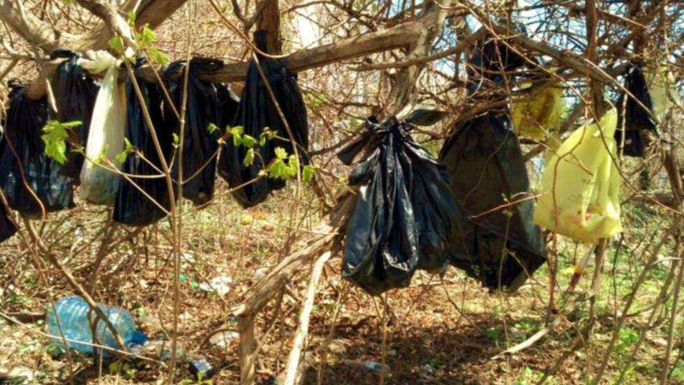 HANG I TRÆR: Parkarbeidere fant de 25 kattene hengende i trær i Yonkers i delstaten New York i april. Nå er en mann arrestert for forbrytelsen. Foto: AP Photo/SPCA of Westchester's Humane Law Enforcement Division/NTB Scanpix