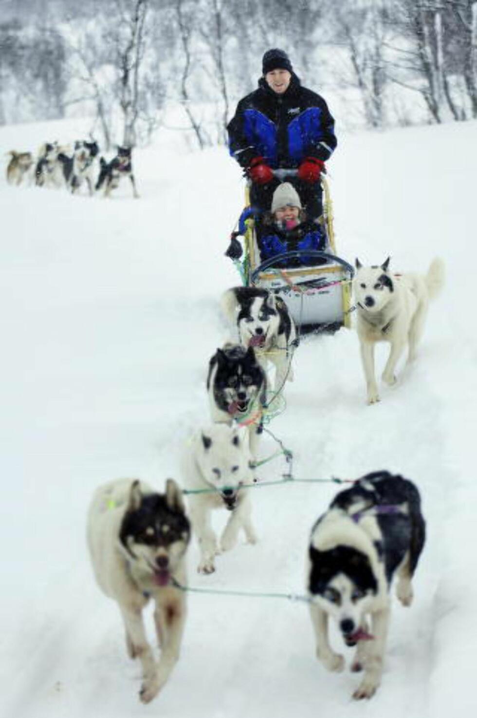 HUSKYTUR: Turister  på hundekjøring på Tromsø Villmarksenter. Foto: INGUN A. MÆHLUM