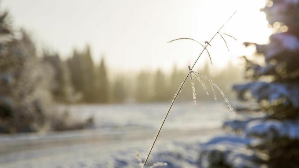 SOL ØSTAFJELLS:  På Ringkollen, helt nord i Nordmarka, har det kommet snø forrige helg. Ifølge Meteorologisk institutt blir folk bosatt østafjells værvinnerne i neste uke. Foto: Tore Meek / NTB scanpix