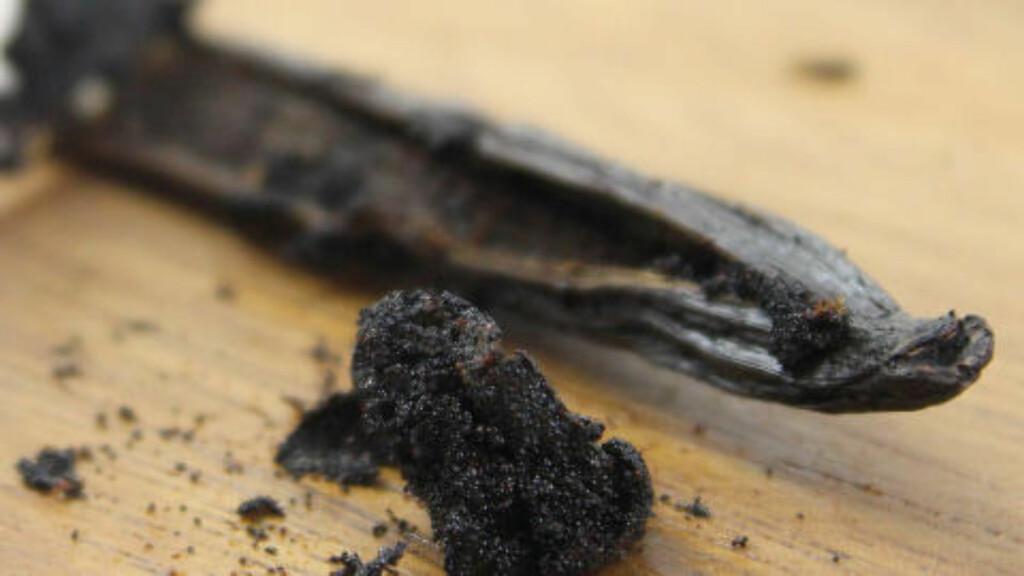 FRØ: Mesteparten av smaken sitter i frøene, men du kan også få mye smak ut av stangen etter at frøene er brukt. Denne tykke, fine vaniljestangen kan fint brukes flere ganger. Foto: OLE PETTER BAUGERØD STOKKE / DINSIDE.NO