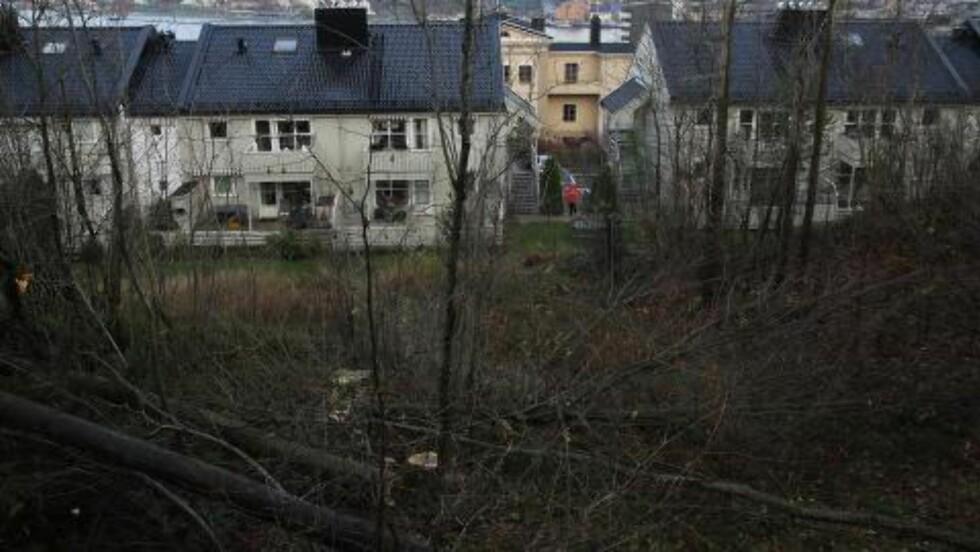 - INNSYN OG BEDRE UTSIKT: Midt på natta skal boligeieren ha fått trehoggere til å ta fire trær på nabotomta, som skal ha skjult deler av utsikten mot Tønsberg by. Etter trefellingen har man fullt innsyn til leilighetene nedenfor, mener styrelederen. Foto: Arne K. Nilsen