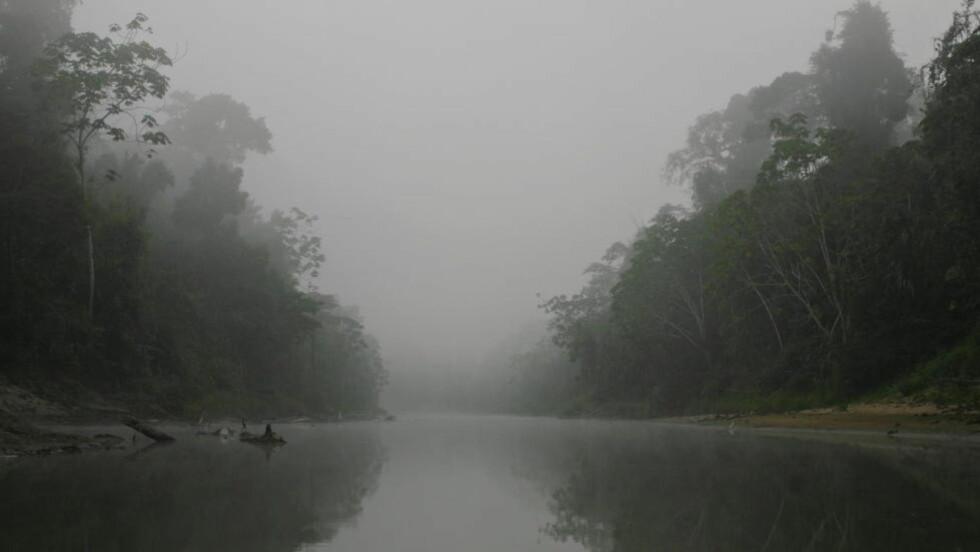 MENNESKESKAPT: Avskoging av regnskog er den nest største kilden til menneskeskapte klimagassutslipp. I indianerreservatet Apiwtxa ved Acre bor ashaninka-indianerne. Urbefolkningens levesettet trues av avskogingen. Foto: Espen Røst / Dagbladet