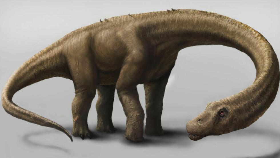 DREADNOUGHTUS:  Slik så antakeligvis Dreadnoughtus ut da den levde for 77 millioner år siden. Foto: AFP PHOTO