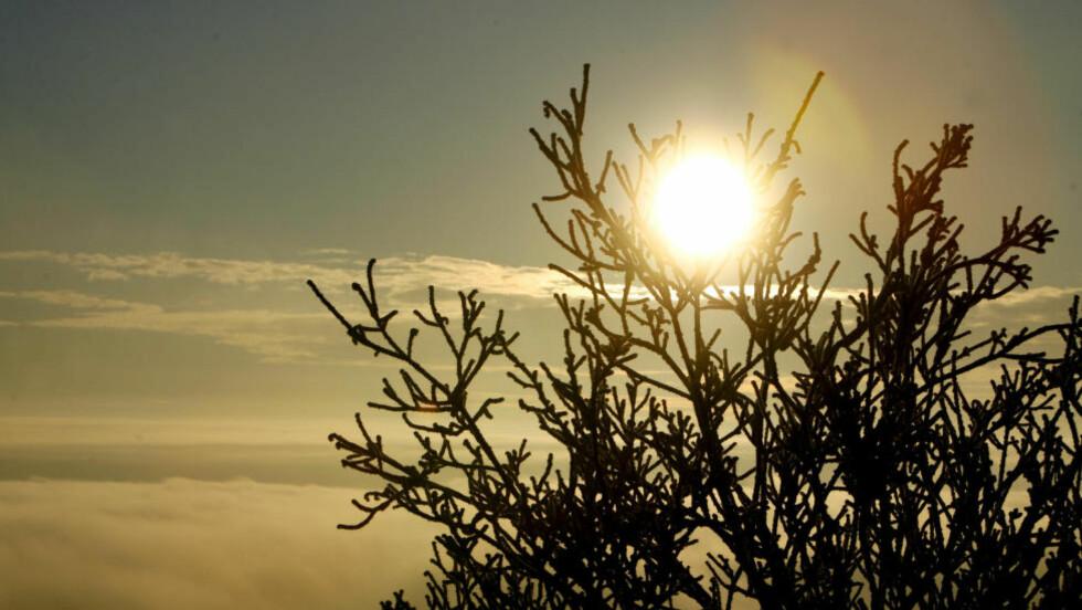 TITTER FREM PÅ JULAFTEN: Vinterstemning Nordmarka i Oslo søndag lille julaften 2007. Foto: Håkon Mosvold Larsen / SCANPIX