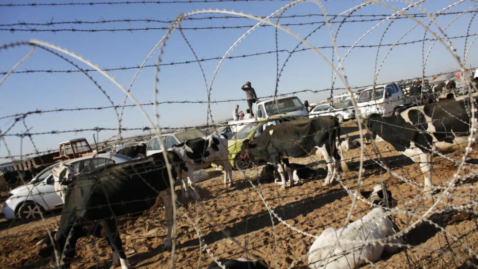 KRIGENS GRENSE: Syriske kurdere har flyktet fra krigerne i IS med buskapen sin til grensa mot Tyrkia. I helga kom mer enn 130 ooo flyktninger til Tyrkia. Bildet er tatt nær byen Suruc. Myndighetene er forberedt på flere, sier visestatsminister Numan Kurtulmus. Foto: REUTERS/Murad Sezer