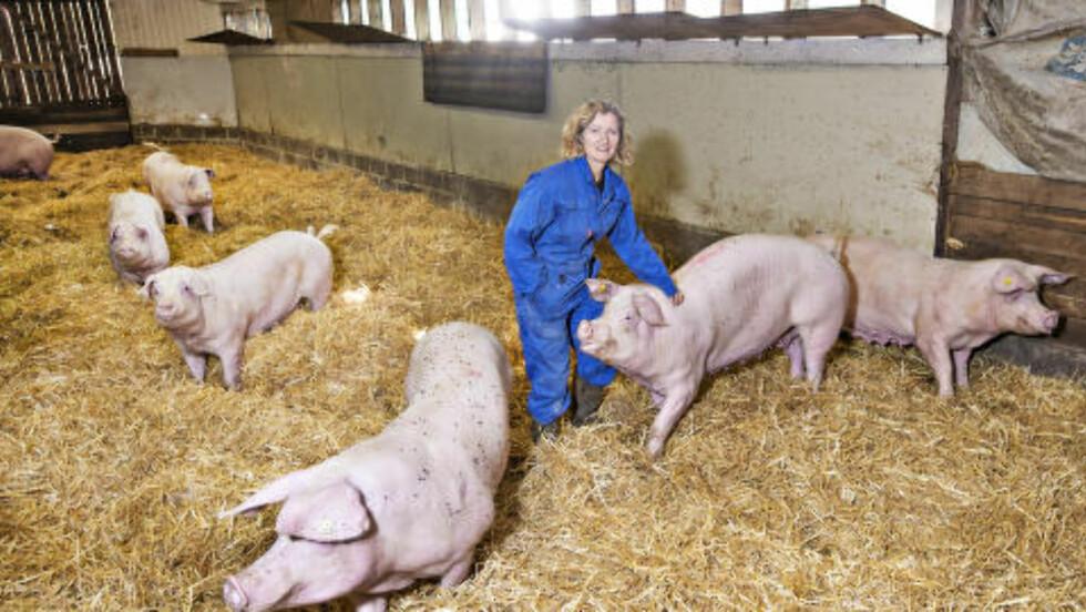 45 PURKER: På Lunder gård i Rakkestad er det omlag 45 purker i produksjon. Til sammen føder de omlag 1 000 griseunger i året. Bonde Kristin Ianssen synes hun har en flott jobb. Foto: Hans Arne Vedlog / Dagbladet