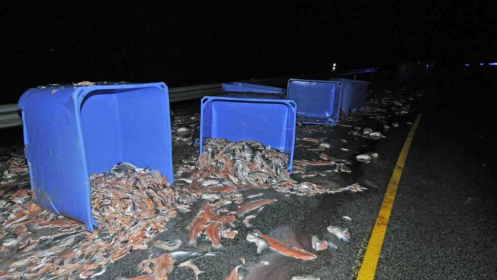 MISTET FISK:  Fisk og fiskeslo i store mengder flyter i veibanen ved Knarvik. En semitrailer mistet lasten på E39 mellom Knarvik og Mundalstunnelsen onsdag kveld. Foto: Erlend Spurkeland / NTB scanpix