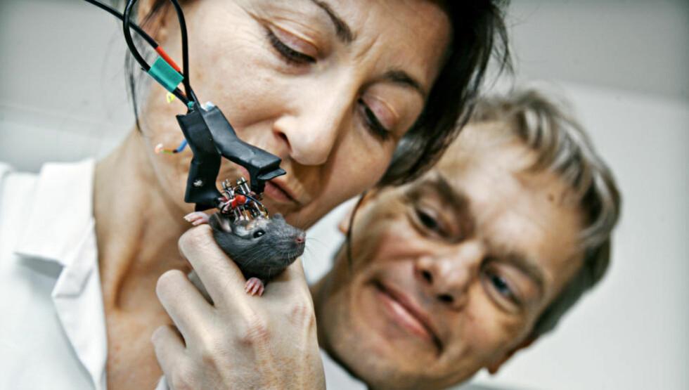FÅR KRITIKK: Nobelprisvinnerne i medisin, May-Britt og Evard Moser får kritikk for å bruke rotter i sin forskning.