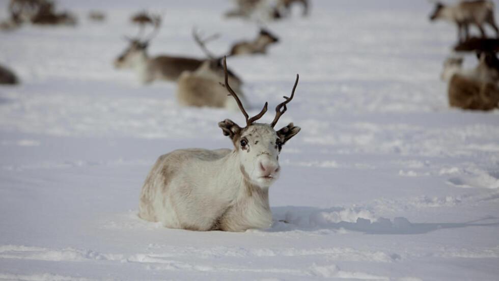 UNORMALT:  Lavrans Skuterud, forsker ved Norsk strålevern også kalt Statens strålevern, forteller at: «I år er det ekstremt». Illustrasjonsfoto: NTB Scanpix.
