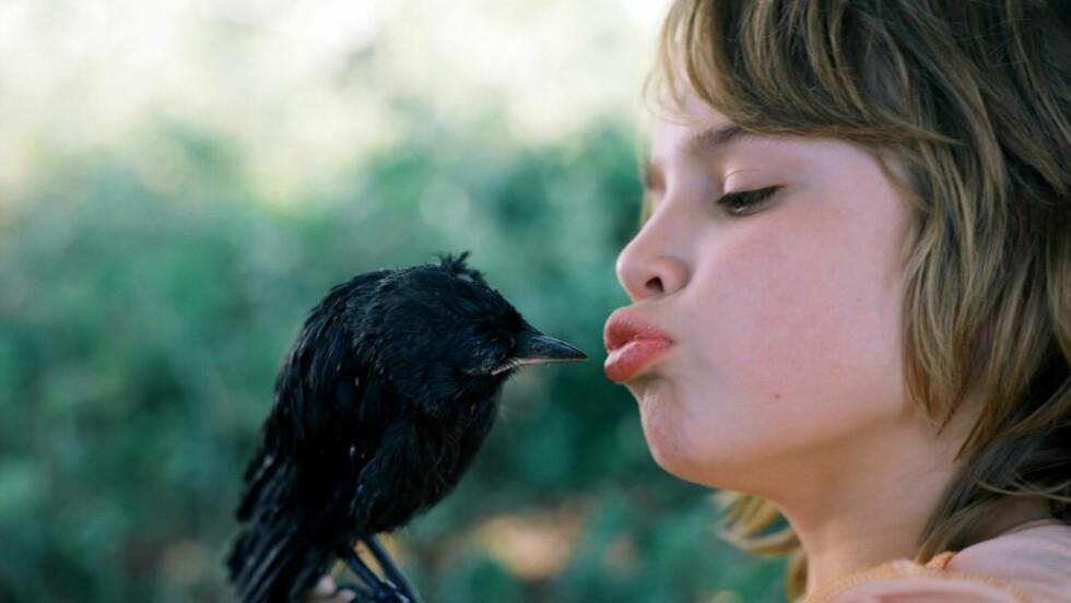 <cutline_leadin>PLUTSELIG OMSORG: </cutline_leadin>Ti år gamle Jojo (Rick Lens) får omsorg for en forlatt fugleunge i «Kråkeungen».